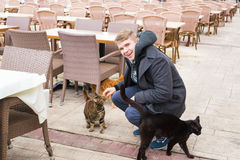 Homeless cat, pet and animals concept - Man caress street cats.  Royalty Free Stock Photos