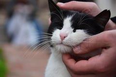 Homeless cat, pet and animals concept - Man caressing cat`s head.  stock photo