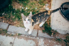 Homeless Cat Portrait on the Street. Selective Royalty Free Stock Photo