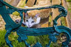 Homeless cat relaxing on a chair. Stock Photos