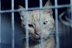 Homeless cat in the shelter Stock Photo