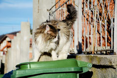 homeless cat  sitiing  on a green garbage bin Royalty Free Stock Photo