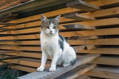 A homeless cat sits on a beam near a mountain of folded boards stock images