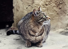 Homeless cat sits outdoor Royalty Free Stock Photos