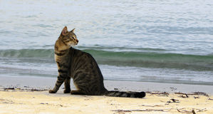 The homeless cat sits on seacoast Stock Photography