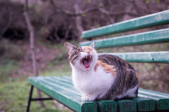 Homeless cat sitting on the bench and yawns Stock Photos