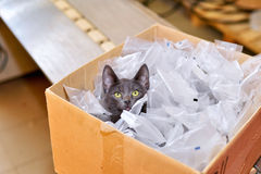 Homeless cat sitting in a cardboard box including plastic packag Stock Photo
