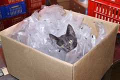 Homeless cat sitting in a cardboard box including plastic packag Royalty Free Stock Image