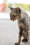 Homeless cat sitting and looking something Royalty Free Stock Images