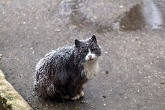 Homeless cat Royalty Free Stock Photos