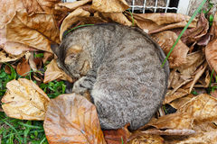 Homeless cat sleeping on autumn leaves near heating grille Royalty Free Stock Images