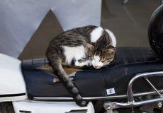 Homeless cat sleeping at seat of old motorbike royalty free stock image