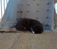 Homeless Cat Stock Images
