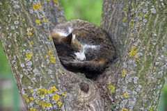 Homeless cat sleeping on a tree Stock Photos