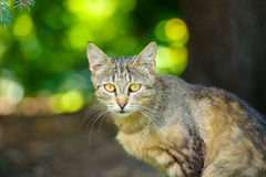 Homeless cat. Staring at you while eating Royalty Free Stock Photography