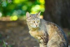 Homeless cat Stock Image