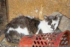 Homeless cat. On the street Royalty Free Stock Image