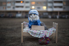 Homeless cat on the street on a cold night Royalty Free Stock Photos