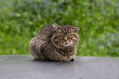 Homeless cat on the street royalty free stock photos