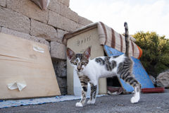 Homeless cat on the street. Hungry cat living in a cardboard box Royalty Free Stock Images