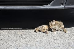 Homeless cat on the street under car in hot day. Sitges, Spain Royalty Free Stock Photo
