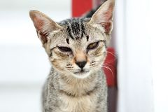 Homeless cat in the temple. Are looking for something Royalty Free Stock Photography