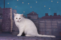 Homeless cat walking on the roof at night Stock Images