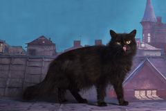Homeless cat walking on the roof at night Stock Photography