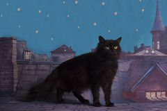 Homeless cat walking on the roof at night Stock Photo
