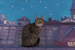 Homeless cat walking on the roof at night Royalty Free Stock Photo