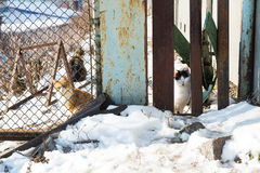 Homeless cats Stock Photo