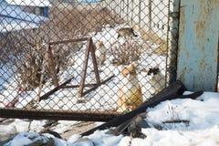 Homeless cats Royalty Free Stock Image