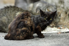 Homeless cats. Couple of homeless cat , on empty street wait for better days Royalty Free Stock Photo