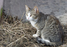 Homeless cats Royalty Free Stock Images