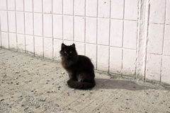 Homeless cats Stock Images