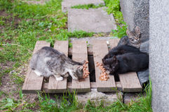 Homeless cats eat cat food royalty free stock photo