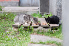 Homeless cats eat cat food royalty free stock images