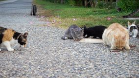 Homeless cats eating feed food on street stock video footage