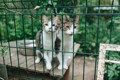 Homeless cats. Kittens looking out from behind the bars of his cage royalty free stock image