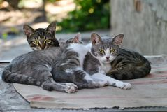 Homeless cats lives in the yard of abandoned house. Front view. Family of homeless cats lay on the backyard of abandoned house royalty free stock image