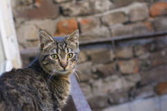 Homeless cats living on istanbul streets photograph Royalty Free Stock Photo