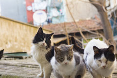 Homeless cats living on istanbul streets photograph Royalty Free Stock Image