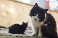 Homeless cats living on istanbul streets photograph Royalty Free Stock Photography