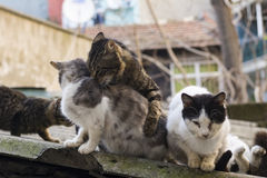 Homeless cats living on istanbul streets photograph Stock Photos