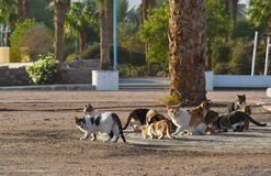 Homeless cats. Looking for food in the Beach area of Eilat, Israel Royalty Free Stock Photo