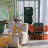 Homeless cats near garbage cans Stock Image