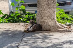 Homeless cats rest from the heat in the shade. On the island of Cyprus, homeless cats slept in the shade of the trees. People and cars do not bother carefree stock photo