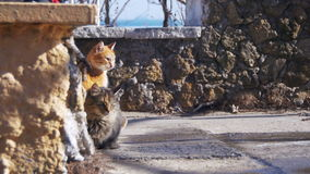 Homeless Cats on the Street Eat Food in Early Spring. Two gray and red cat eat bread on the street stock video footage