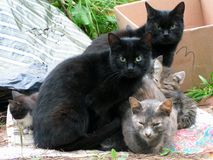 Homeless cats waiting for food. Homeless cats with kittens are waiting for food from good people stock photo