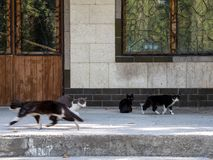 Homeless cats walking on the street. Homeless cats walk down the street around the houses in search of food royalty free stock image